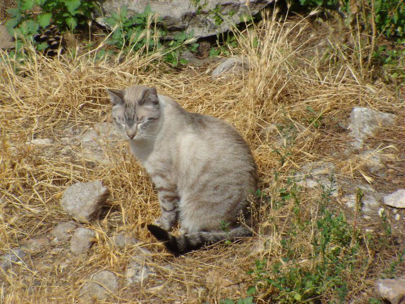 Alleyway, Kittens, Cats