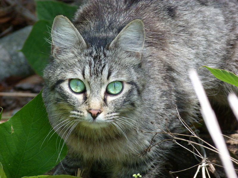 Homeless, Kittens, Cats