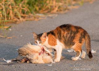 Cats, Kittens, Cat, Alleyway