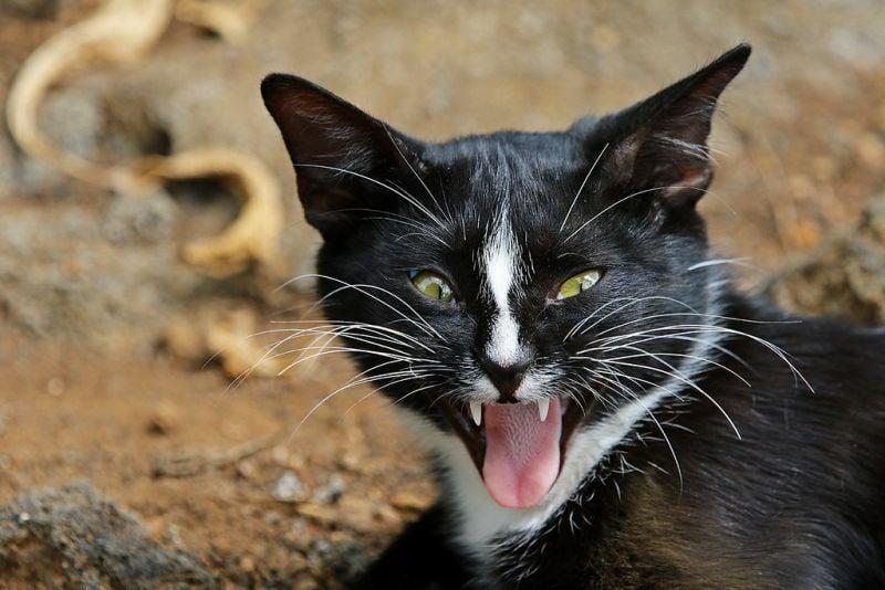 Cats, Stray, Homeless