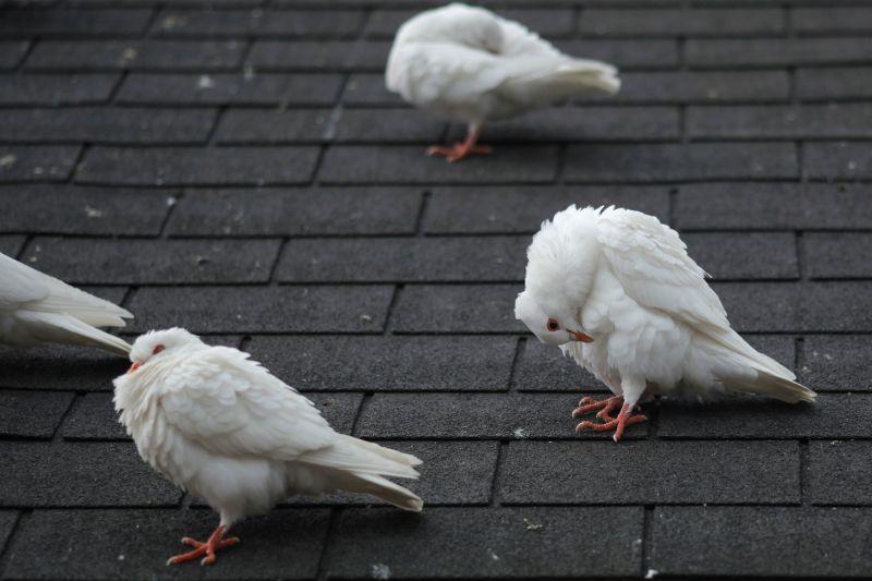 Pigeon Control Solar Panel