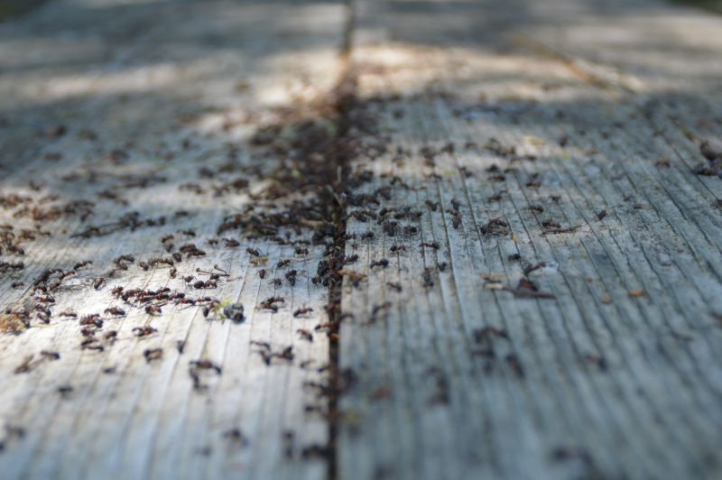 ant extermination in NV