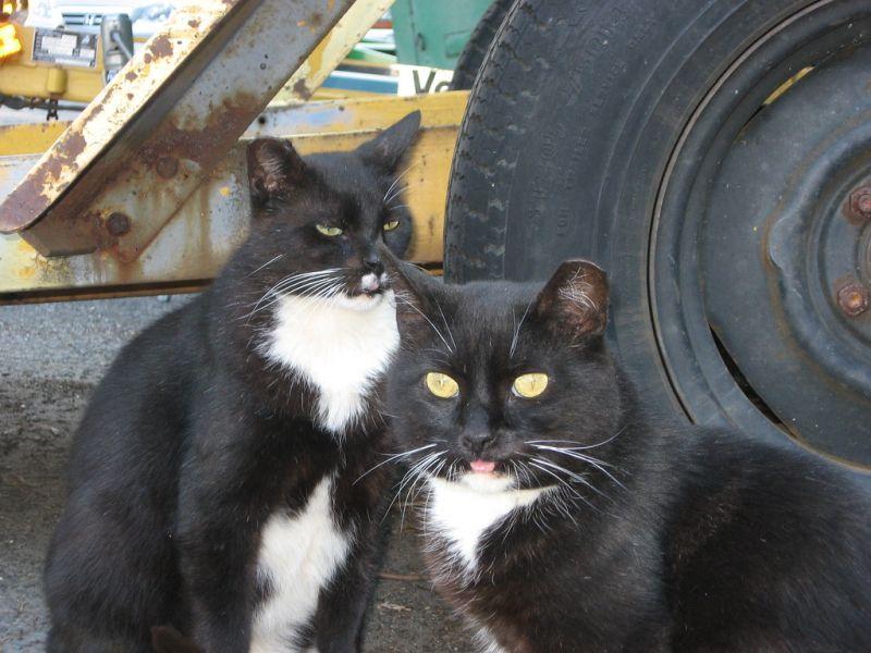Homeless, Community Cats, Cats, Stray