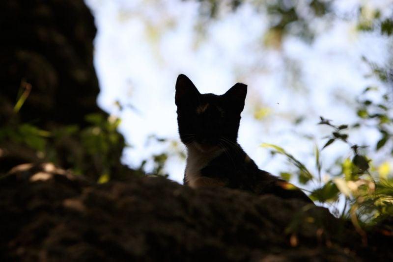 Kittens, Community Cats, Homeless