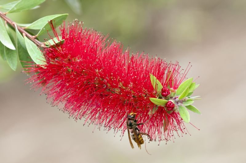 Green Wave Pest Solutions Hornet Extermination