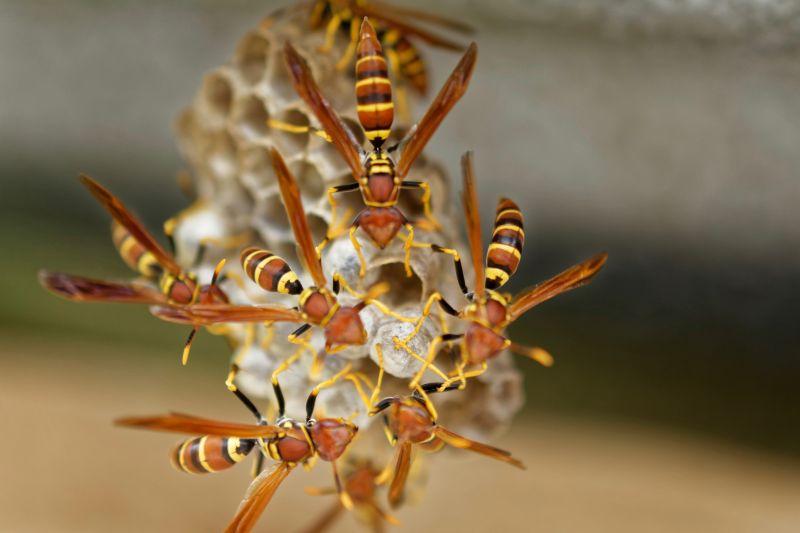 wasp nest exterminators Green Wave Pest Solutions