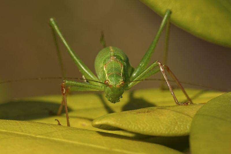 cricket infestation las vegas